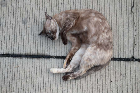 Close up of cat on the ground sleeping on concrete floor Stock Photo