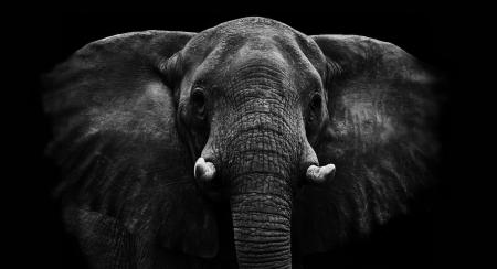 elefanten: Elefant Lizenzfreie Bilder