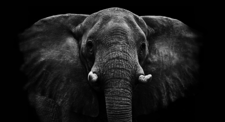 threatened: Elephant Stock Photo