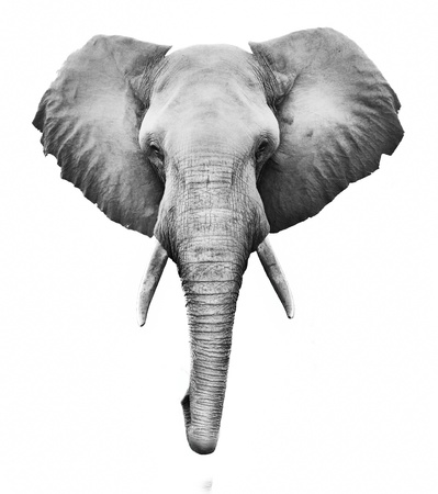 Creative black and whit image of an African elephant