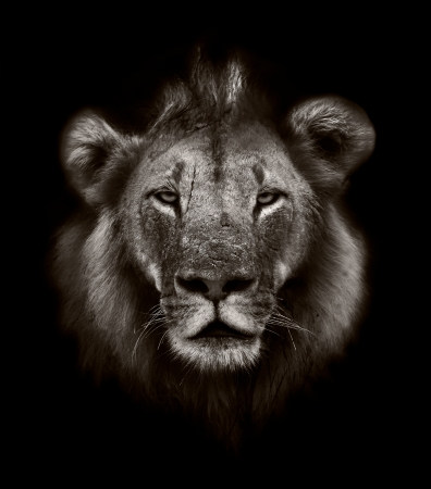 artisitc: Artisitc black and white image of a Lion