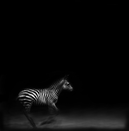 burchell: Artistic image of a zebra running using motion blur to convey movement