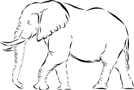 silhouettes elephants: Line Vector la ilustraci�n del arte de un elefante africano