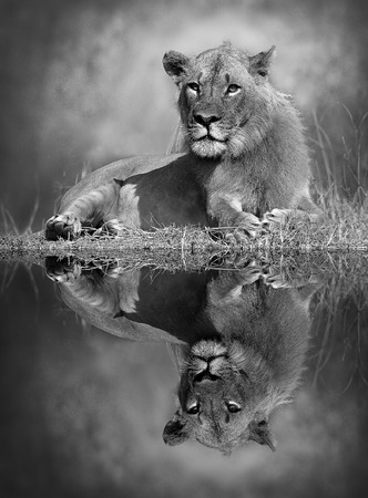 Black and white image with a reflection in the water