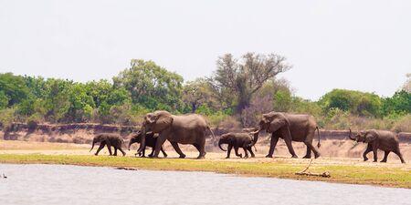 pozo de agua: Manada de elefantes africanos salvajes caminando a la charca