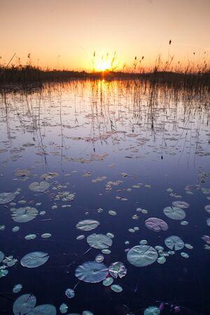 Okavango Delta: Okavango Delta Sunset