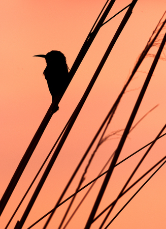 Bird sitting on a branch in silhouette