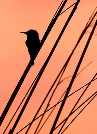 Zitting van de vogel op een tak in silhouet