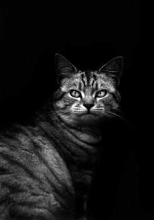 Leuke kat in zwart-wit Stockfoto
