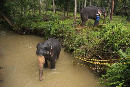 Elephant bathing in a river, Sri Lanka