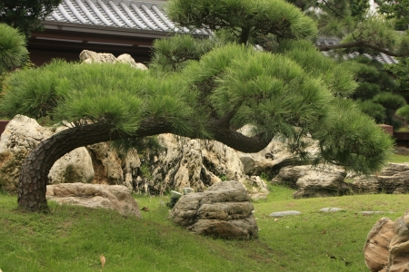 lanscape: Leaning bonsai tree, Chi Lin Nunnery, Hong Kong Stock Photo