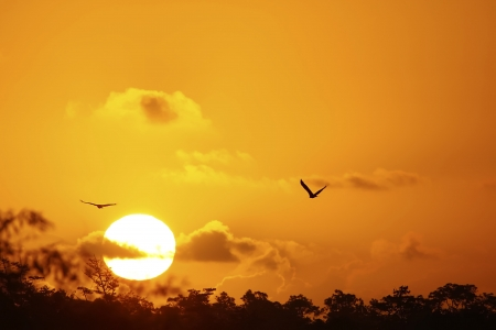 Sunrise with silhouetted flying birds Stock Photo - 17415823