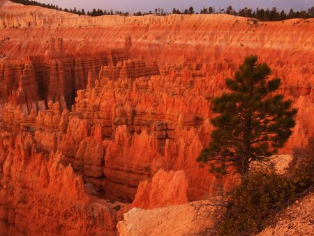 Bryce Canyon National Park at sunrise, view from Sunset point, Utah, USA photo