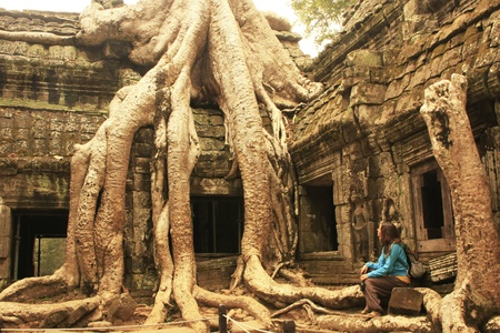 to reap: Ta Prohm temple, Angkor area, Siem Reap, Cambodia