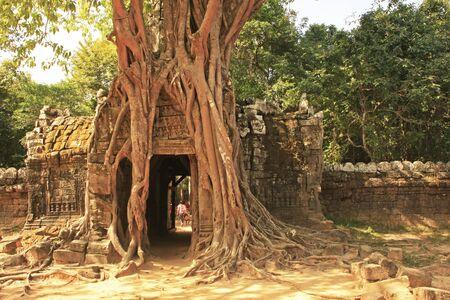 strangler: Ta Som temple, Angkor area, Siem Reap, Cambodia