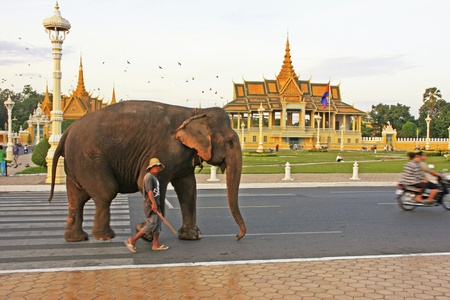 Elephant walking on Sisowath Quay, city center of Phnom Penh, Cambodia Фото со стока