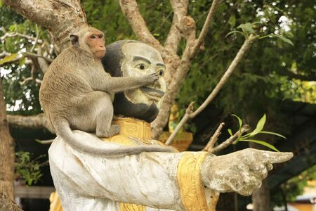 Long-tailed macaque playing at Phnom Sampeau, Battambang, Cambodia, Southeast Asia