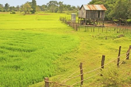 Paalwoning buurt rijstveld, Cambodja, Zuidoost-Azië