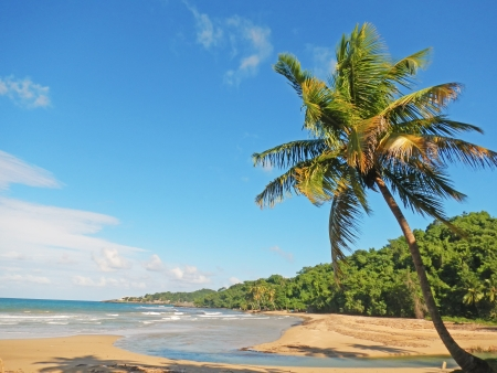 limon: Palm tree on a beach, Playa El Limon, Dominican Republic