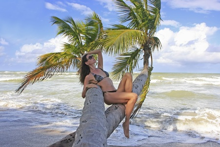 Young woman in bikini sitting on palm trees, Bonita beach, Dominican Republic photo
