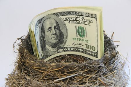 Dollar bills in a bird nest photo