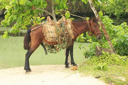 Small horse at Rincon Beach, Samana Peninsula, Dominican Republic Stock fotó