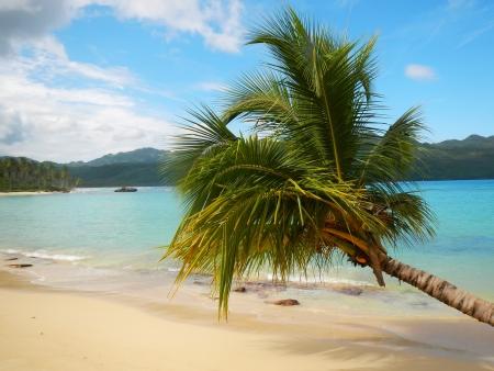 Leaning palm tree at Rincon beach, Samana peninsula, Dominican Republic