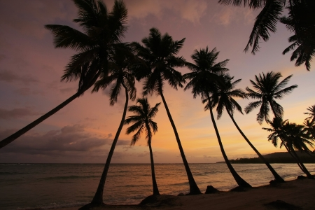 Silhouette of palm trees at sunrise, Las Galeras beach, Samana peninsula, Dominican Republic photo