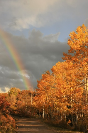 Rainbow over aspen trees, Colorado, USA photo