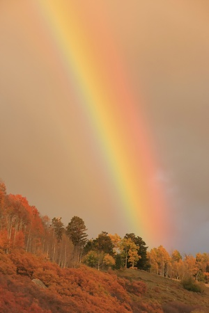 Rainbow over aspen forest, Colorado, USA photo