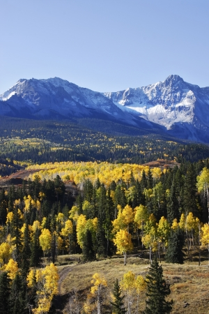 hayden: Dallas Divide, Uncompahgre National Forest, Colorado, USA