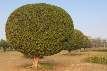 Trees in a garden around Lotus Temple, New Delhi, India photo