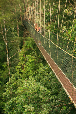 Tourist standing on canopy walkway, Taman Negara National Park, Malaysia photo