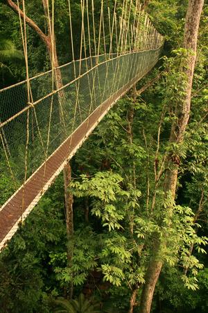taman: Canopy walkway, Taman Negara National Park, Malaysia