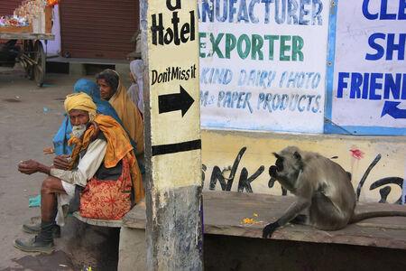 hanuman langur: Local people and gray langur sitting in the street, Pushkar, Rajasthan, India