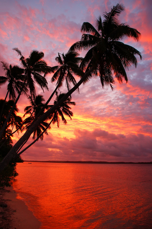 Silhouetted palm trees on a beach sunset, Ofu island, Vavau group, Tonga