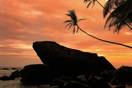 Silhouetted palm trees and rocks at sunset, Unawatuna, Sri Lanka photo
