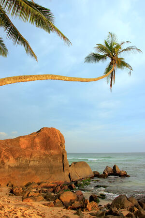 Leaning palm tree with big rocks, Unawatuna beach, Sri Lanka photo