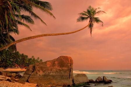 galle: Leaning palm tree with big rocks at sunset, Unawatuna beach, Sri Lanka