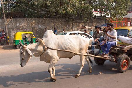 indian buffalo: Bullock cart in the busy street of New Delhi, India