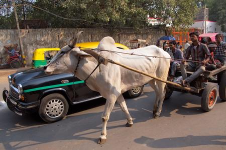 bullock animal: Bullock cart in the busy street of New Delhi, India