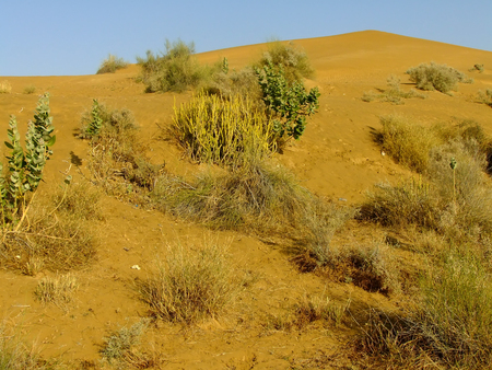 thar: View of Thar desert near Jaisalmer in Rajasthan, India. Thar desert forms a natural boundary between India and Pakistan.