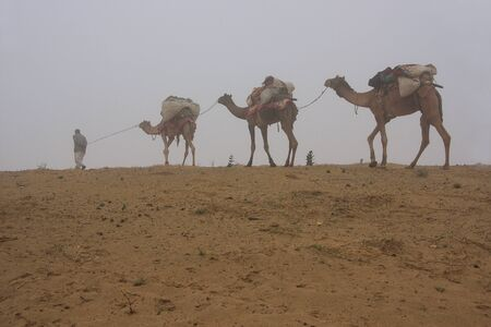 thar: Local guide with camels walking in early morning fog, Thar desert, Rajasthan, India Stock Photo