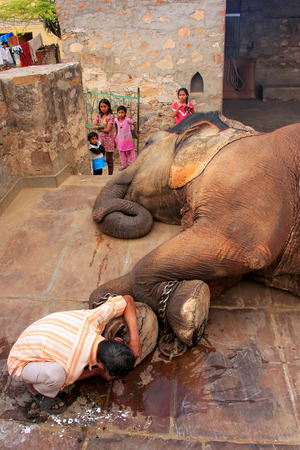 caretaker: Local caretaker cleaning elephants foot at small elephant quarters in Jaipur, Rajasthan, India. Elephants are used for rides and other tourist activities in Jaipur.