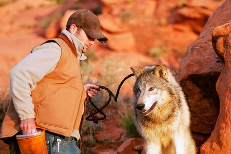 lupus: Gray wolf (Canis lupus) with an animal trainer Editorial