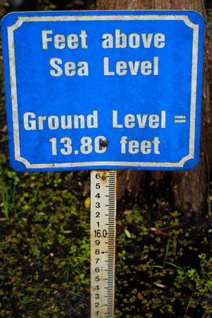 slough: Sea level marker at 6 mile Cypress Slough, Florida