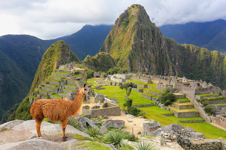 Llama debout à Machu Picchu au Pérou surplombent. En 2007 Machu Picchu a été élu l'un des sept nouvelles merveilles du monde. Banque d'images