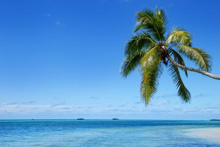Leaning palm tree at Makahaa island near Tongatapu island in Tonga. Kindom of Tonga is an archipelago comprised of 169 islands Stock Photo