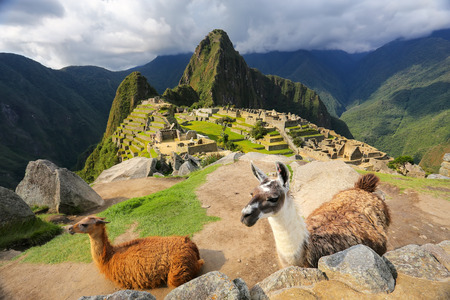 Llamas standing at Machu Picchu overlook in Peru. In 2007 Machu Picchu was voted one of the New Seven Wonders of the World. Stock Photo