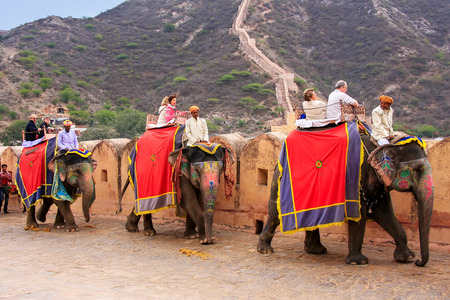 Decorated elephants going on the cobblestone path to Amber Fort near Jaipur, Rajasthan, India. Elephant rides are popular tourist attraction in Amber Fort.